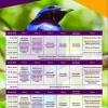 panfleto 1° Festival de Aves de Porto Seguro